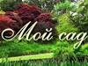 МОЙ САД, садовый центр Новосибирск